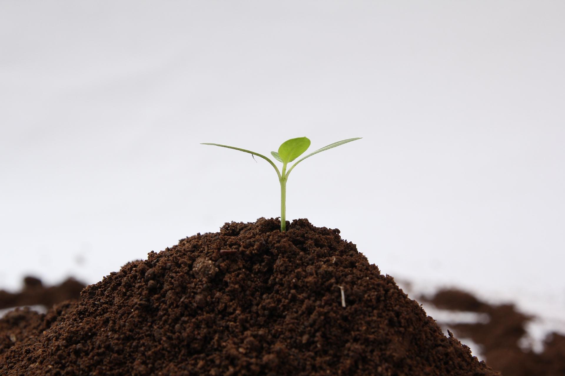 8f6276b8548ceed34538d2d0fae01476 m 毛髪の「森」を育てるには、「大地」となる頭皮を育てましょう