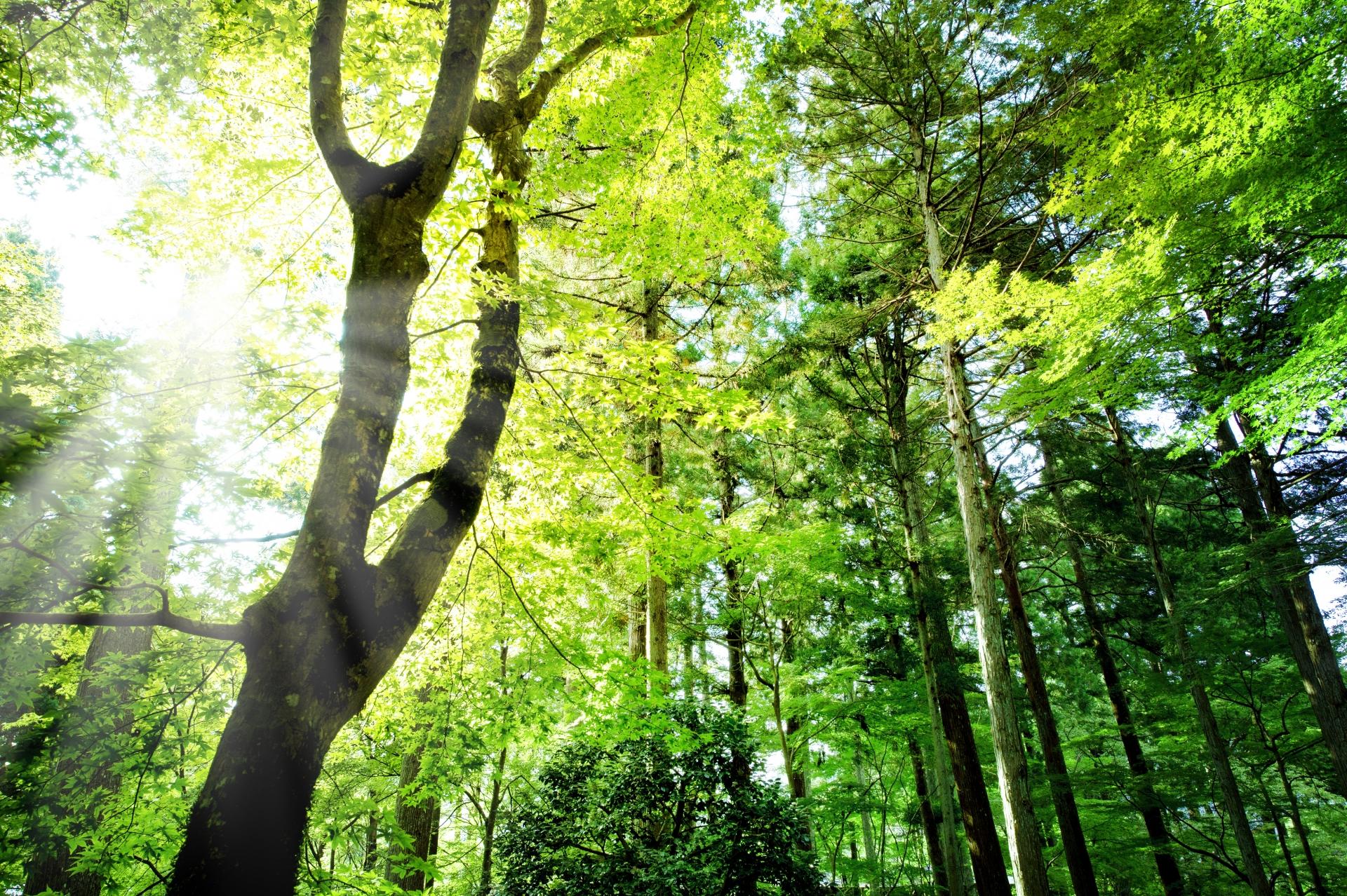 9d1f8433af176f9fcb6bf6093e349f70 m 毛髪の「森」を育てるには、「大地」となる頭皮を育てましょう
