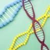 遺伝子が担う、毛髪の謎とは?