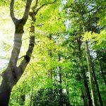 毛髪の「森」を育てるには、「大地」となる頭皮を育てましょう